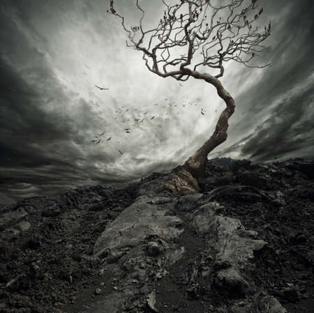stormy: Dramatic sky over old lonely tree