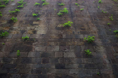 Old wall with green plants on it. photo