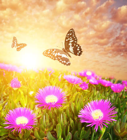 purple butterfly: Butterflies over flower field