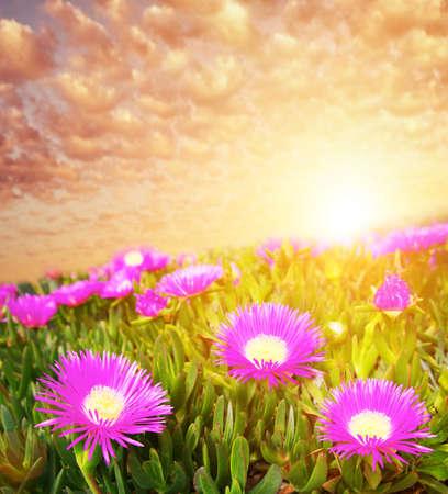 Beautiful sky over flower field  photo
