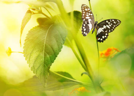 Beautiful butterfly on a green leaf photo