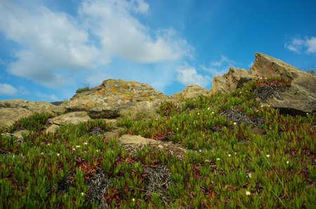 Plants growing on  a rocks. Stock Photo - 13679987