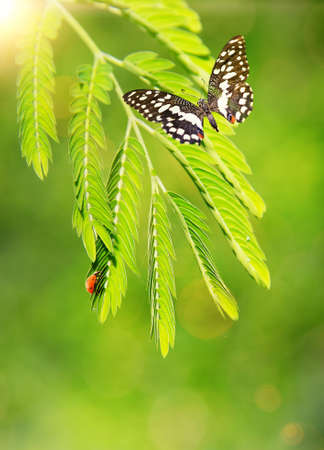 Ladybug and a butterfly on a green leaf photo