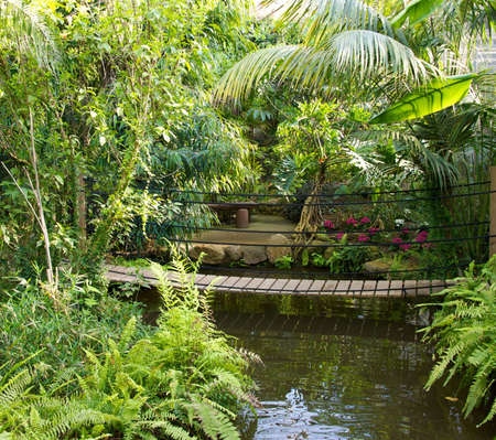 Wooden bridge over a pond in tropical park photo