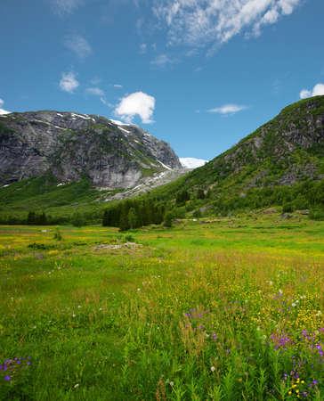 Beautiful meadow in norwegian mountains Stock Photo - 15197724