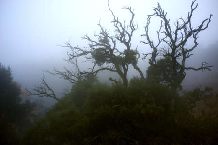Old spooky tree in a fog Stock Photo - 14990947