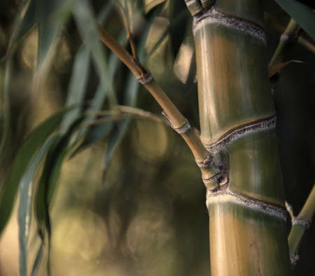 Close-up of a bamboo plant photo