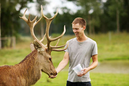 cautious: Man feeding deer