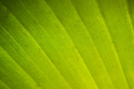 Close-up texture of palm leaf photo