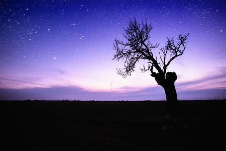 starlit: Starry sky over lonely tree silhouette