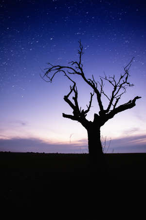 Starry sky over lonely tree silhouette photo