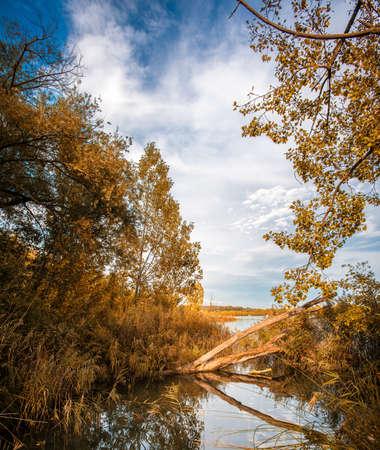 view through: Lake view through trees  Stock Photo