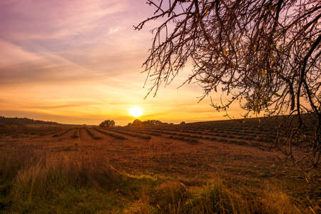 Autumn lavender field on sunset photo