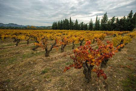 Beautiful vineyard landscape view Stock Photo - 16752087