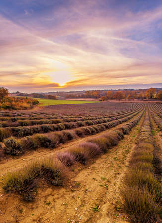 Colorful sky over lavender field photo