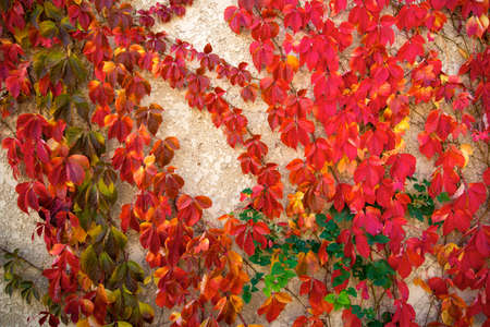 Beautiful red leaves on concrete background photo