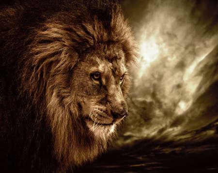 leones: Le�n contra el cielo tormentoso Foto de archivo