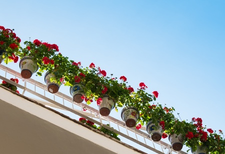 Beautiful flower pots hanging on balcony's rails photo