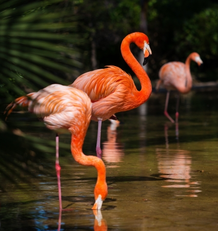 Group of pink flamingos near water photo