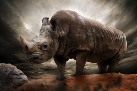 nashorn: Huge Nashorn gegen stürmischen Himmel Lizenzfreie Bilder