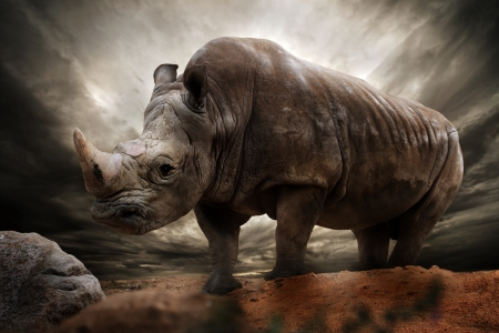 rhino: Huge rhinoceros against stormy sky Stock Photo