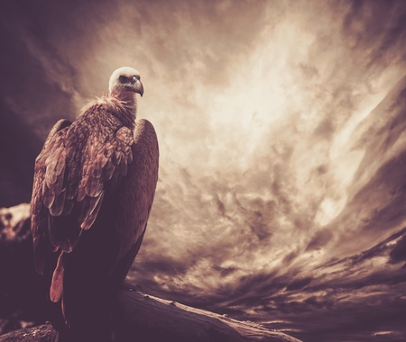 Eagle sitting on a log against stormy sky photo