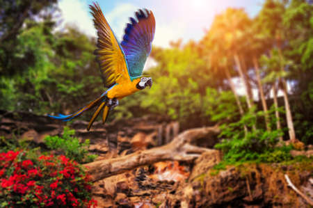 birds of paradise: Beautiful Ara parrot on tropical forest background