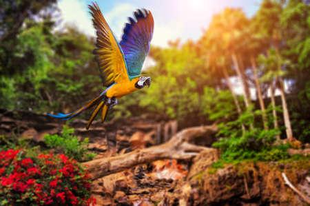 loro: Hermosa Ara loro en el fondo del bosque tropical Foto de archivo