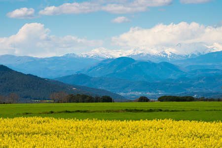 Raps field with Pyrenees in distance photo