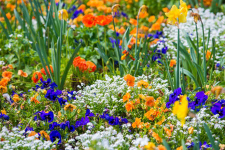 Different colourful beautiful flowers on flowerbed photo