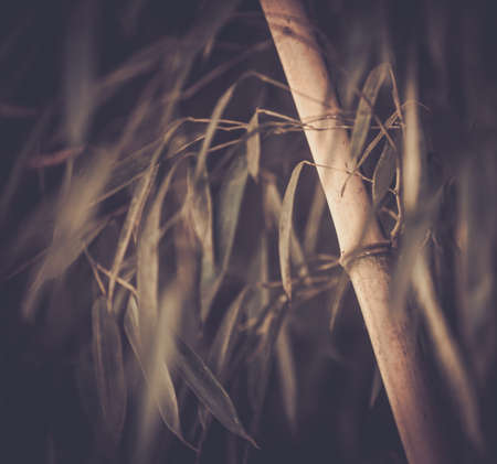 Toned picture of a bamboo plant photo