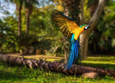 열 대 배경 위에 아름 다운 화려한 앵무새