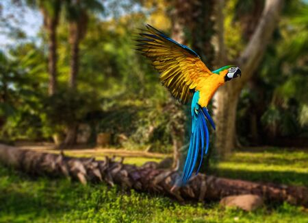 Beautiful colourful parrot over tropical background  Banco de Imagens