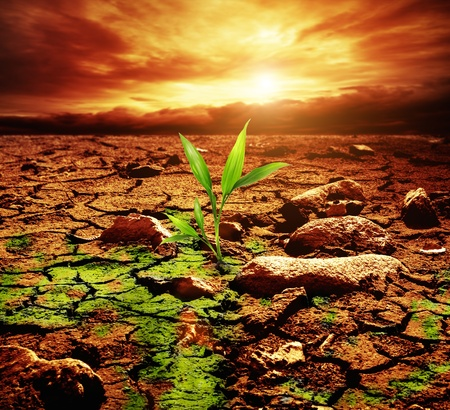 Green plant growing trough dead soil Standard-Bild