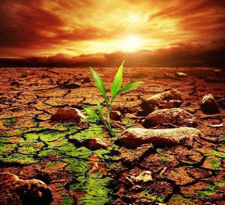 Planta verde creciente del suelo a través muertos Foto de archivo