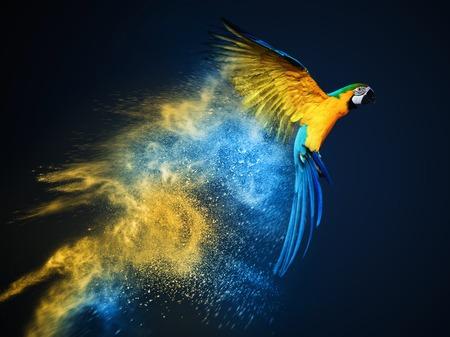 Latanie nad kolorowe papugi ara eksplozji proszku Zdjęcie Seryjne