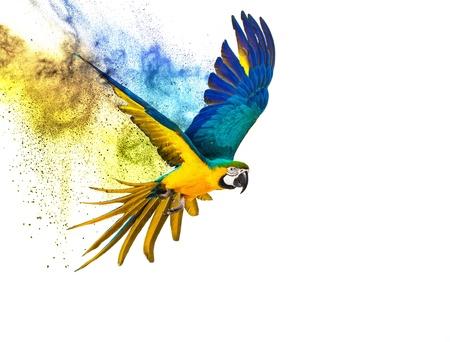 Kleurrijke vliegende papegaai geïsoleerd op wit Stockfoto - 33457457