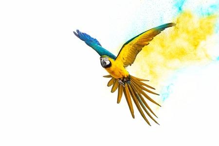 カラフルな空飛ぶオウム白で隔離