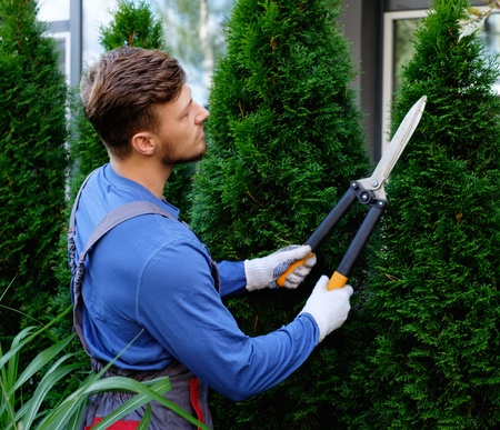 Young gardener cutting trees with clippers Stock Photo