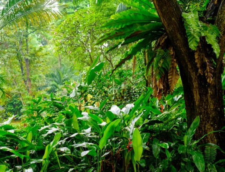 Üppigen tropischen grünen Dschungel