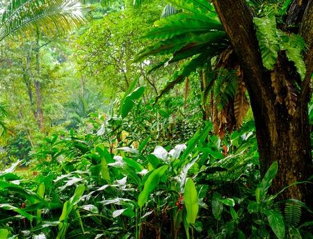 무성한 열대 녹색 정글 스톡 콘텐츠