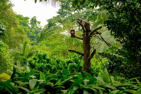 Monkeys family siting on the wood branch in tropical rainforest. Stock Photo
