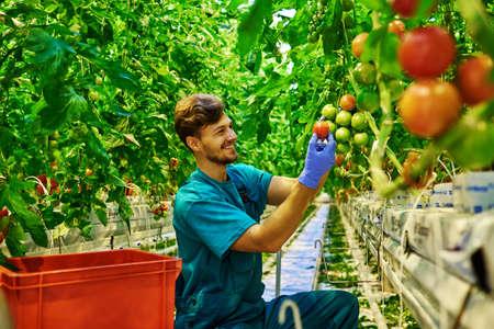 Friendly farmer at work in greenhouse Standard-Bild