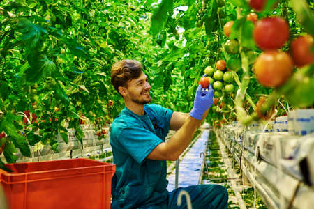 Friendly farmer at work in greenhouse Reklamní fotografie