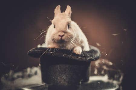 Little rabbit in a magician hat. Archivio Fotografico