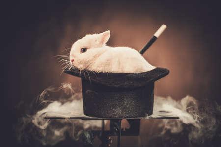 Pequeño conejo en un sombrero de mago.