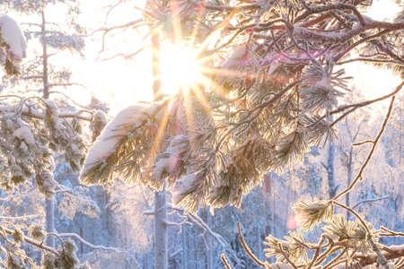 Sun shining through snowy trees.