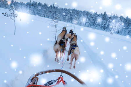 Riding husky sledge in Lapland landscape.
