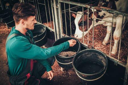 낙농 농장에서 외양간에 송아지를 먹이 젊은 농부.