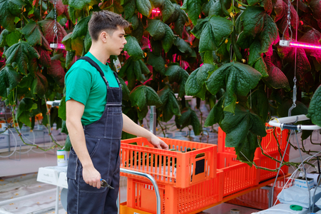 Man working in a greenhouse